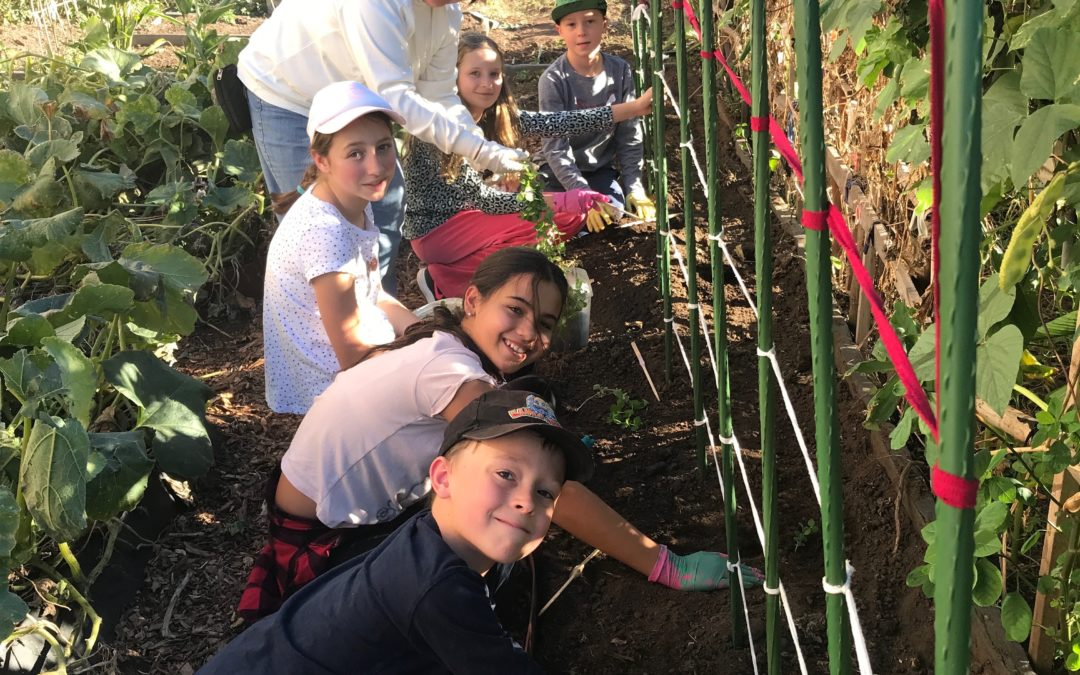 Gardening, Carepacks & Fun! School Holiday Volunteering for age 6+