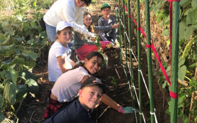 A garden is the perfect place for growing community spirit